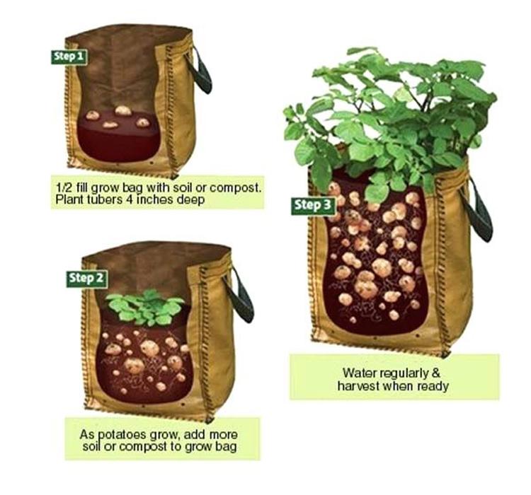 potato-grow-bags